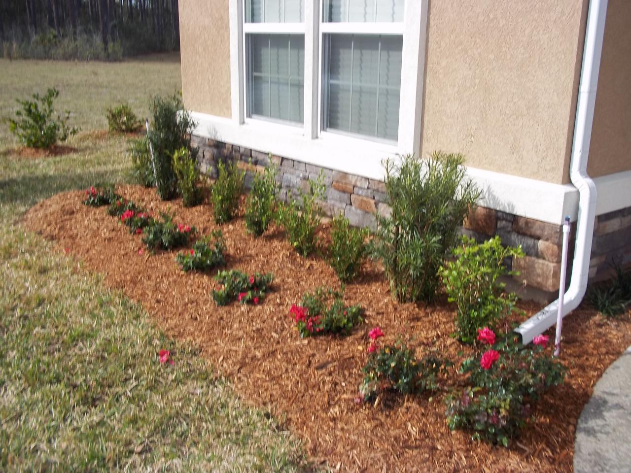 Landscaping With Boxwoods And Roses : Podocarpus boxwood red ruffle azalea and knockout roses