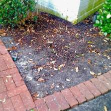 BEGONIAS | Design & Install | Curb Appeal